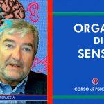 Organi di Senso - Prima Lezione di Base completa - Tutorial